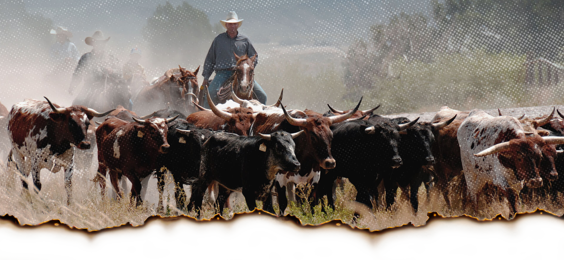 lone star cc events header cattle drive